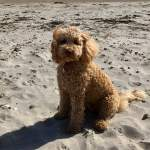 teddy the dog on west wittering beach