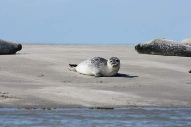 the witterings common seal